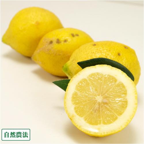 興津農園レモン